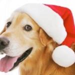 Cachorro1370983657